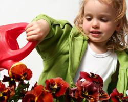 The Denbigh Show and Denbigh Flower Show